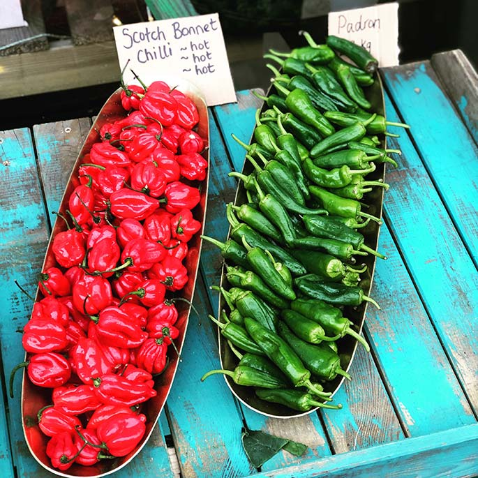A row of green Padrons and a row of red Scotch bonnets